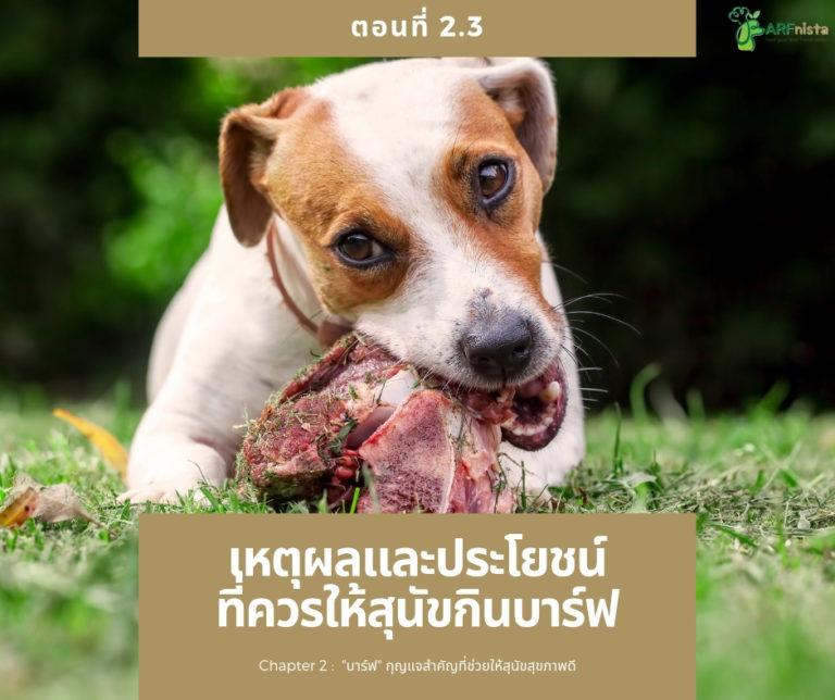 เหตุผลและประโยชน์ที่ควรให้สุนัขกินบาร์ฟ