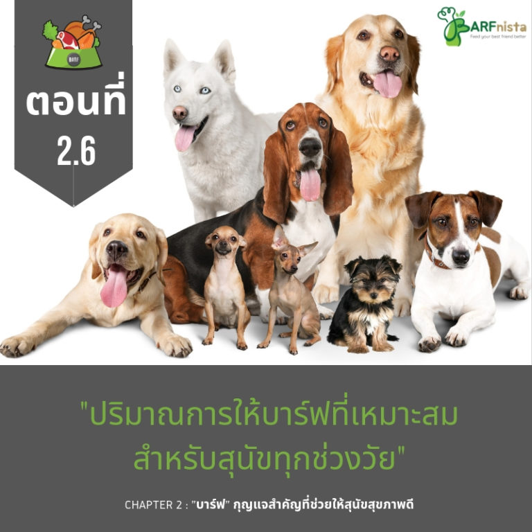 ปริมาณบาร์ฟที่เหมาะสมสำหรับสุนัขทุกช่วงวัย