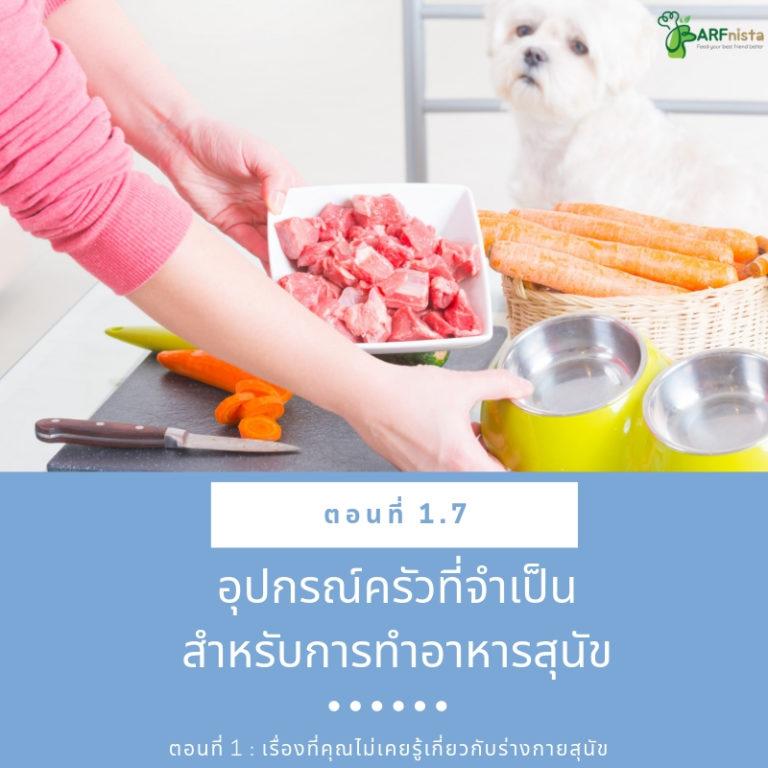 อุปกรณ์ครัวที่จำเป็นสำหรับการทำอาหารสุนัข