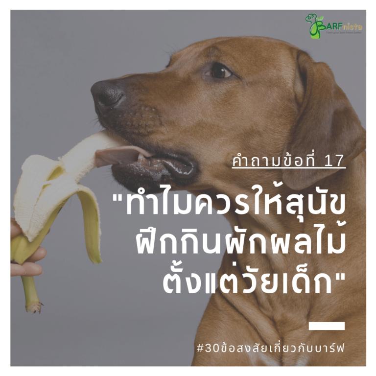ทำไมควรให้สุนัข ฝึกกินผักผลไม้ ตั้งแต่วัยเด็ก